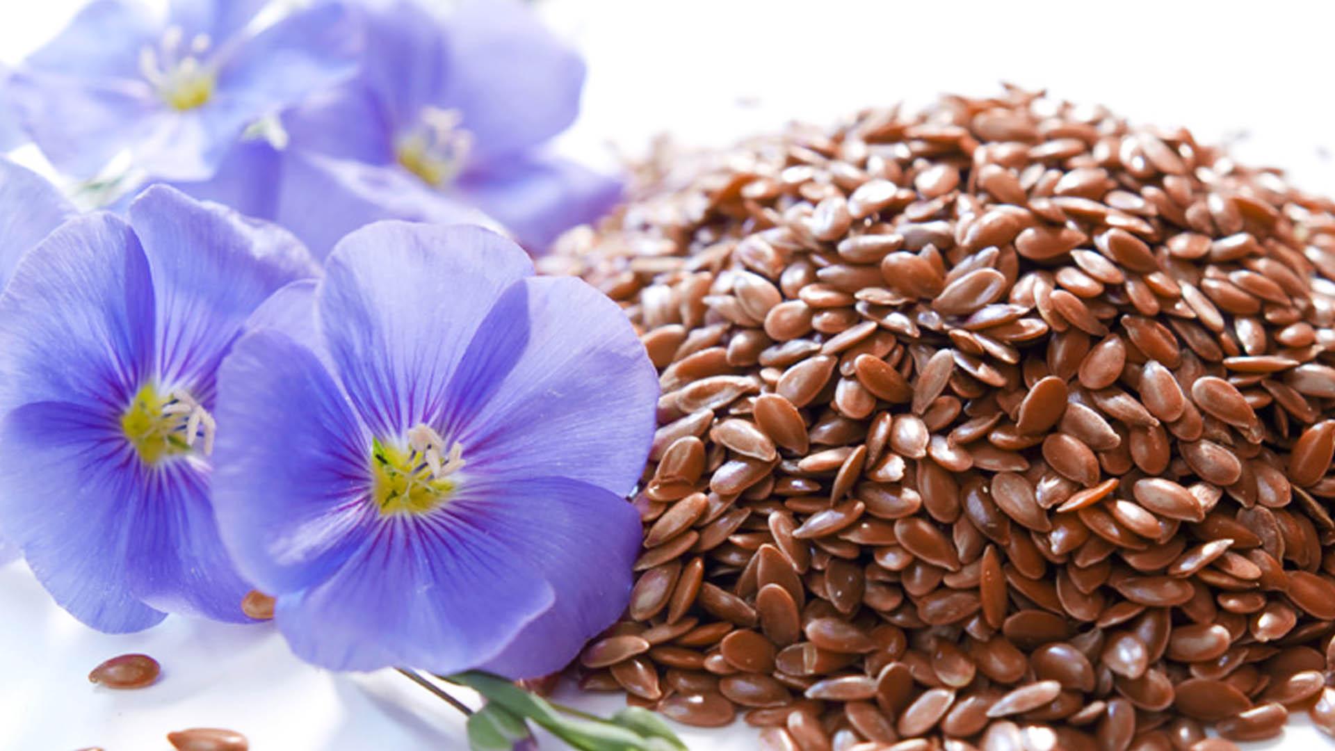 Семена льна помогут очистить кишечник и похудеть   советы.
