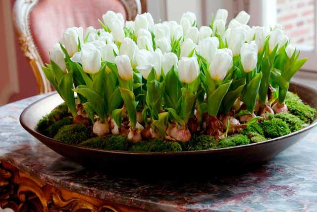 Как вырастить тюльпаны в воде дома
