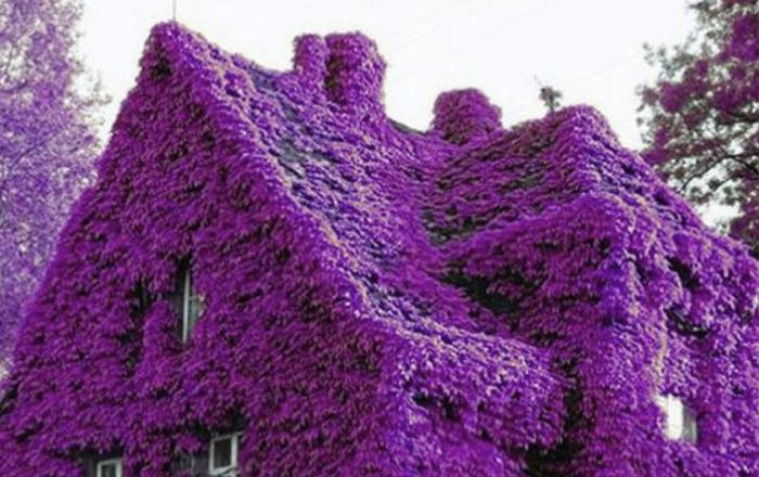 Самые красивые и великолепные дома, просто утопающие в море цветов