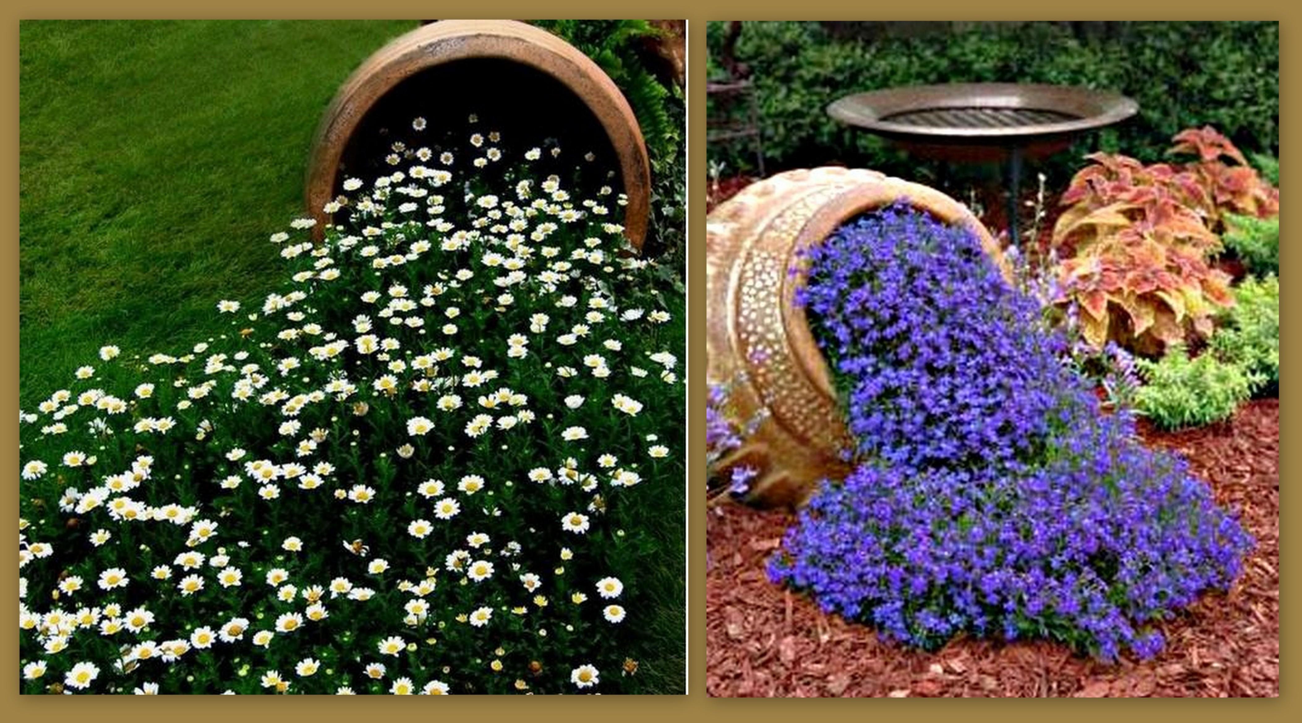 Каталог многолетних цветов