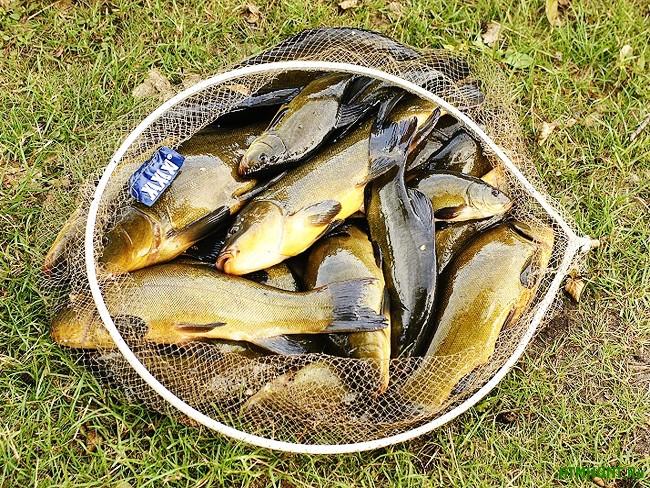 смеси прикормки рыбы