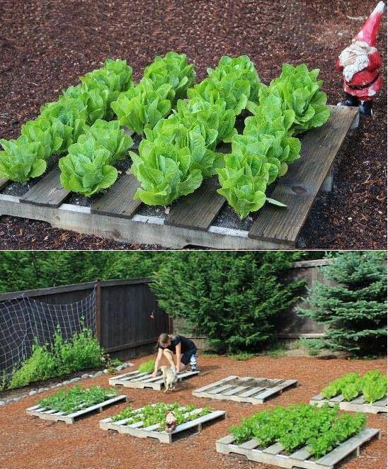 Интересные идеи для дачи и огорода своими руками фото