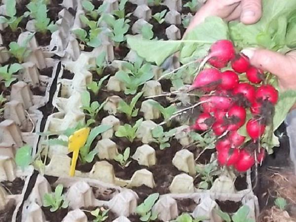 людей можно посадить редиску и землянику вместе NORVEG разрабатывается, исходя